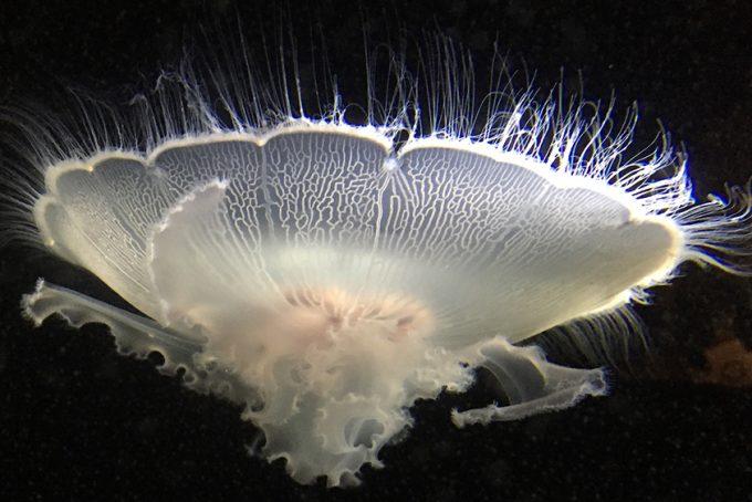 Jellyfish in the sea