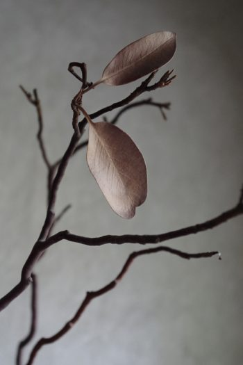 photo of a dry knotty branch