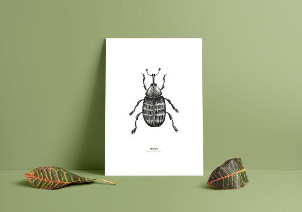 tallvivel print, insekter till väggen