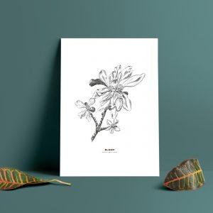 print, poster, äppleblom, apple blossom