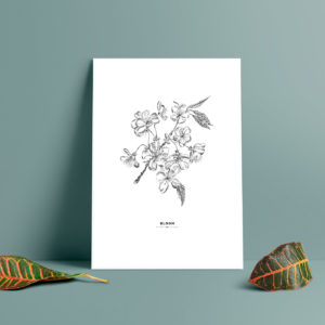 Körsbärsblom, tavla med körsbärsblommor