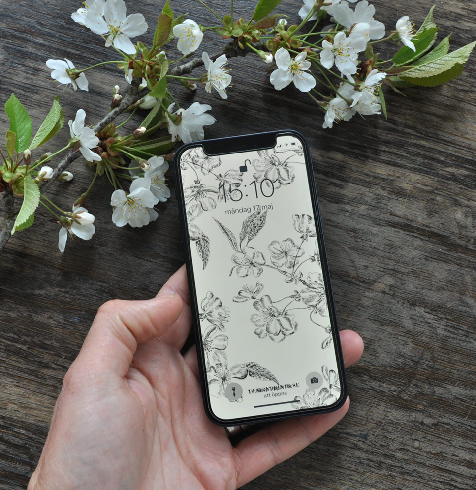 wallpaper iPhone cherry. bakgrundsbild till mobiltelefon, körsbär
