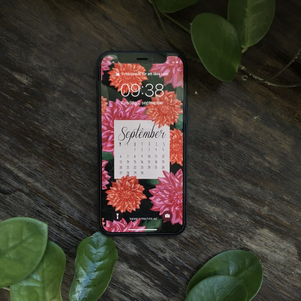 wallpaper, September, dahlia, bakgrund till mobilen, designprints