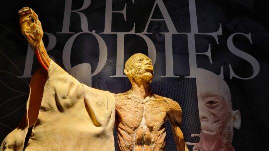 'Real Bodies' laat je binnenkijken in het menselijk lichaam