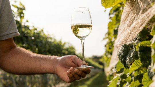 Zes unieke wijndomeinen uit Noord-Brabant