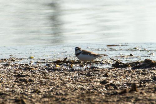 Snötroll