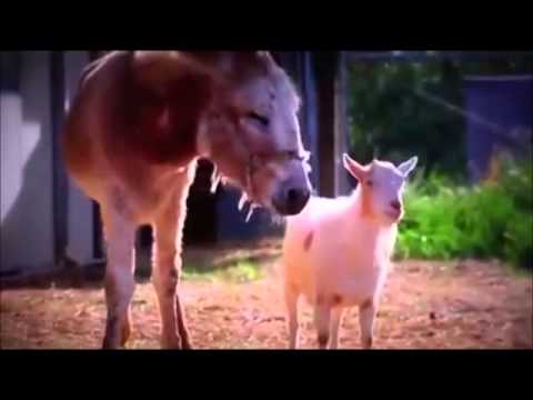 DTV Production 9  حیوانات هم احساس دارند