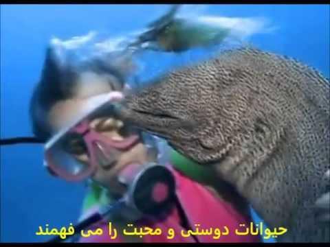 DTV Production 18 حیوانات دوستی و محبت را می فهمند