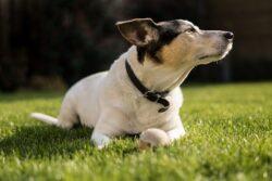 de-gezondheid-van-uw-hond
