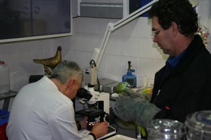 Vogel operatie Dierenkliniek Othene Terneuzen