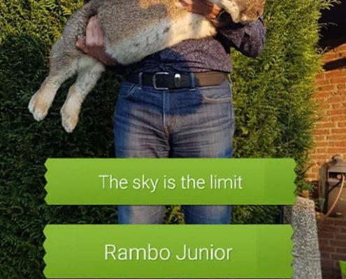 Terneuzen Dierenkliniek Othene Rambo Junior Othene Dierenkliniek Dierenkliniek-Othene konijn