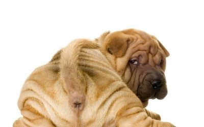 Mijn hond heeft last van wormen?