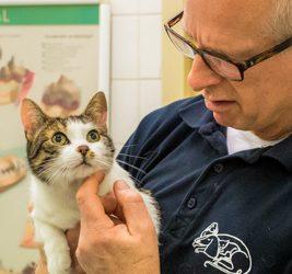 Chronisch tekort aan dierenartsen in Nederland.