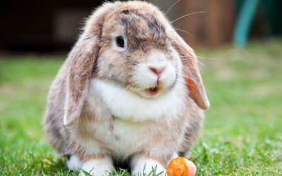 Warmte maatregelen voor het konijn.