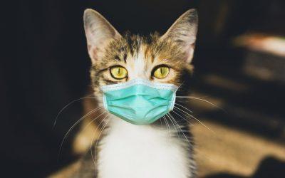 Update maatregelen bezoek dierenkliniek Statenlaan