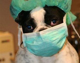 Update maatregelen bezoek dierenkliniek ter Weerlaan rondom het covid-19 virus