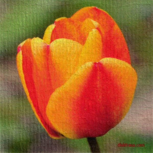 Disktrasa med motiv av enkel tulipan Kjell Mari Ekvall