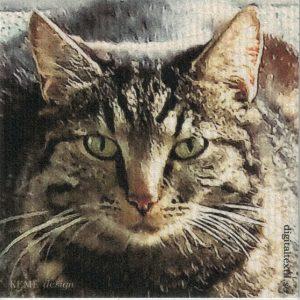 Disktrasa med motiv av katt triss Kjell Mari Ekvall