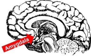 Hjernen og amygdala, hypnoseterapi kan ændre din angst.