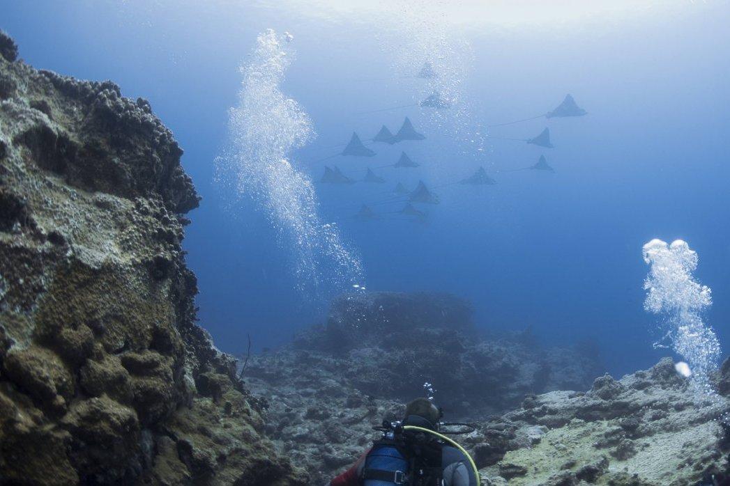Tauchplätze auf Mauritius Tauchgebiete Dive In Mauritius