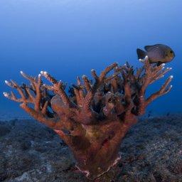Corals in Mauritius