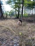 Fuchsapport I