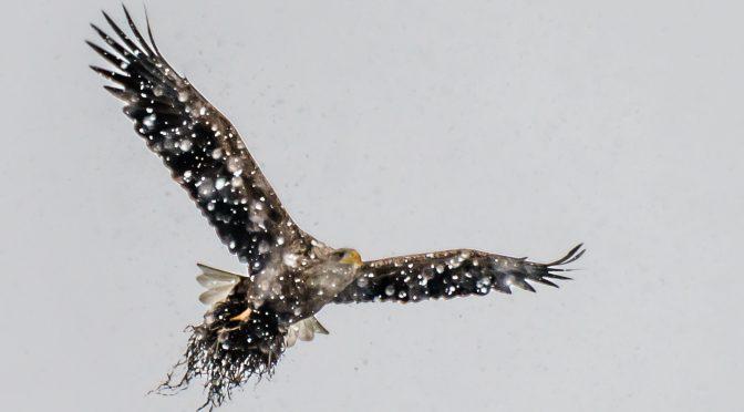 Ørnens Dag i Jyllinge