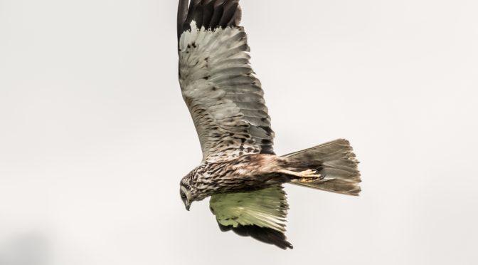 Sangfugletur i Ramsødalen