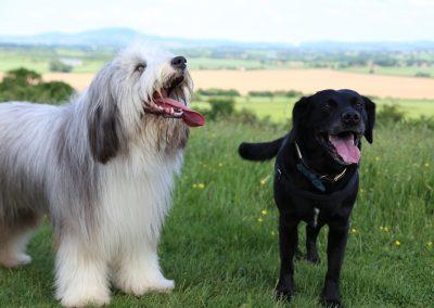 ADVENTURE WALKS - cloes up doggies