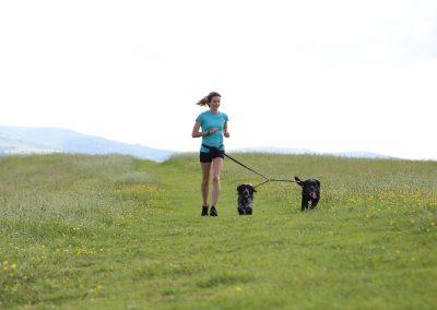 DOG JOGS - dog jog hillside