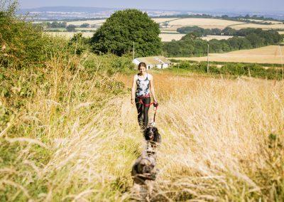 DOG JOGS - dogs in wheat fields