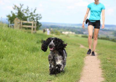 DOG JOGS - dogs running hill