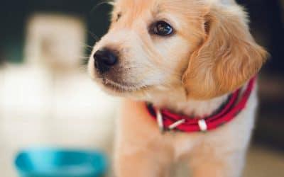 Hoe krijg ik mijn puppy zindelijk?