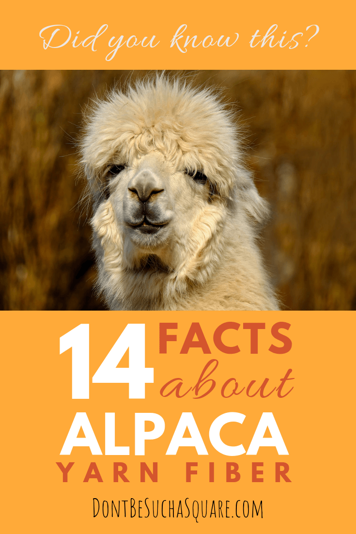 Did you know this? 14 facts about alpaca yarn – Learn more about alpaca yarn at DontBeSuchaSquare.com #yarn #alpacayarn #knitting