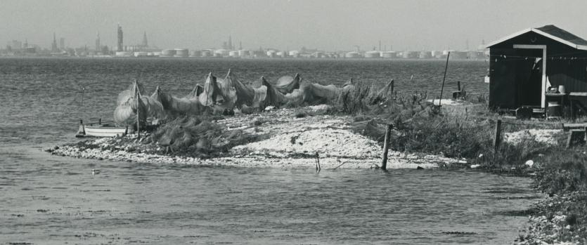 Åleruser på Saltholm.  Foto af J. Billingsley, 1969.
