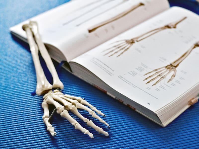 Anatomielehre Drauphysio Praxis Villach