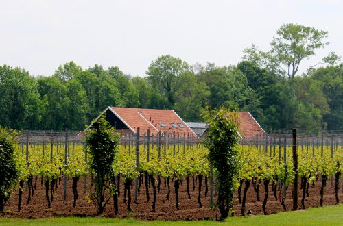 Deel Achterhoek erkend als wijnregio (BOB), waaronder wijngaard Hesselink