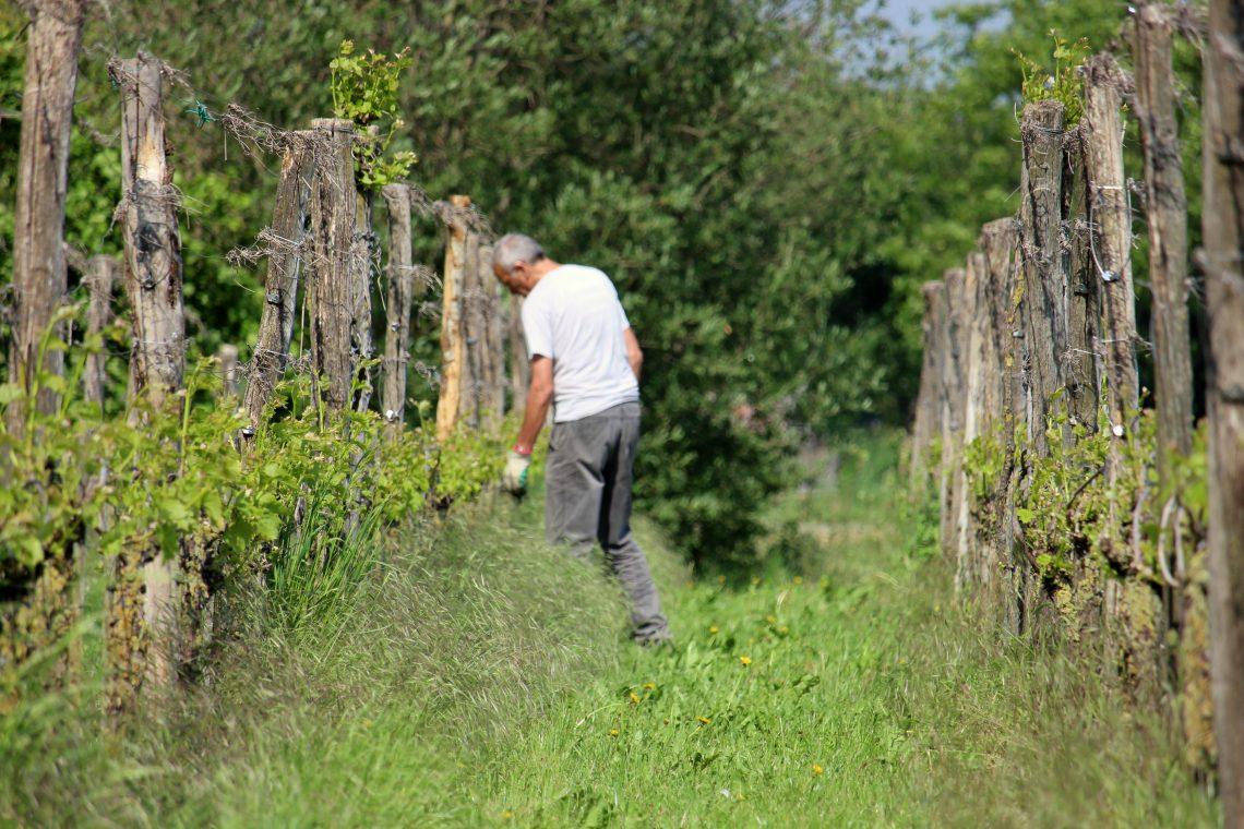Goud voor wijn uit Montferland op Berliner Wein Trophy