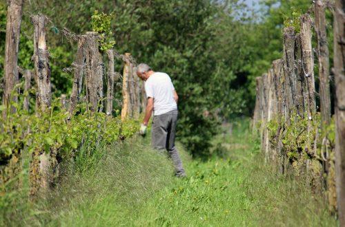 wijn uit Montferland