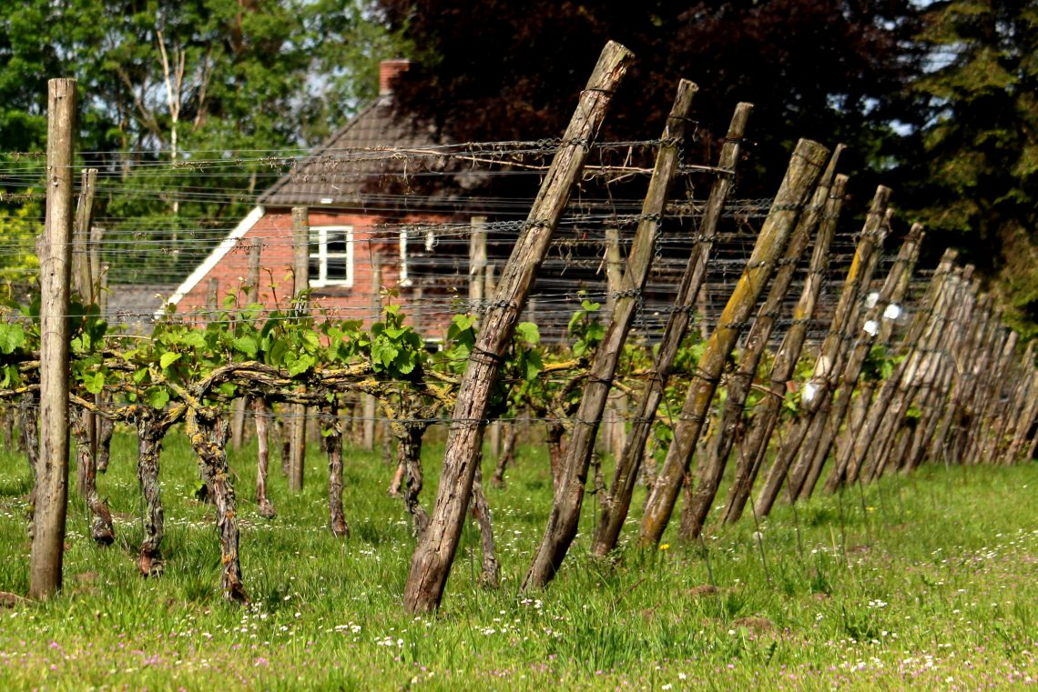 Achterhoekse wijnbouwers
