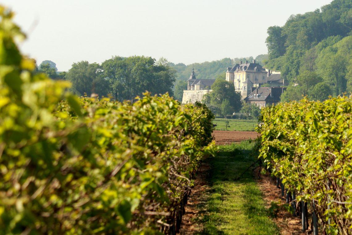 Nederlandse wijnboeren 2020