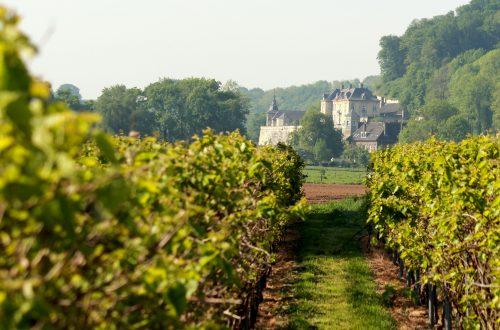 Nederlandse wijn 2020 wijnboeren dutch wine