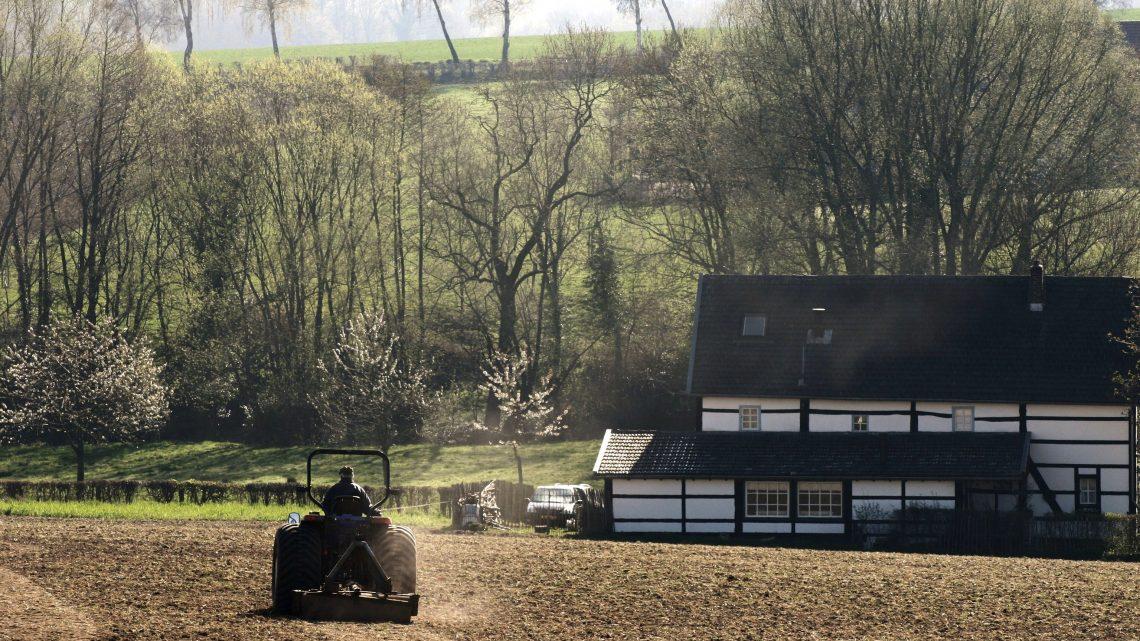 Bodem nederlandse wijngaarden