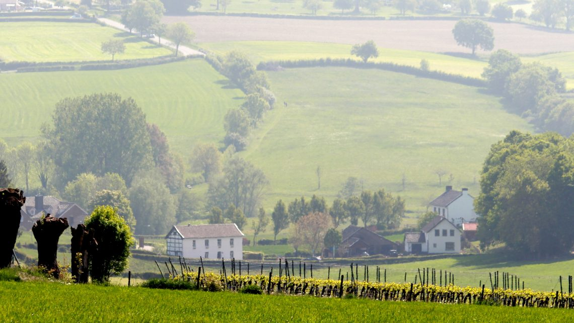 Terroir Nederlandse wijngaarden