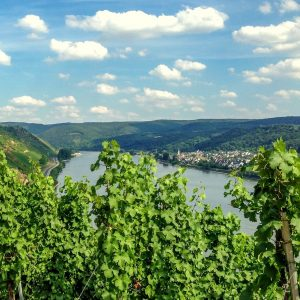 Duitsland riesling nederlandse wijn dutch wine