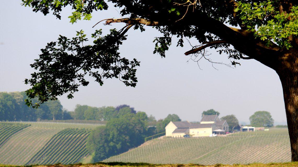 Geschiedenis nederlandse wijn