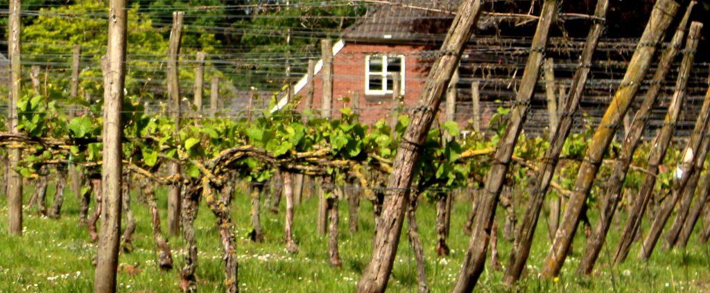 Achterhoekse wijn
