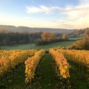Limburgse wijn limburg mergelsberg nederlandse wijn dutch wine