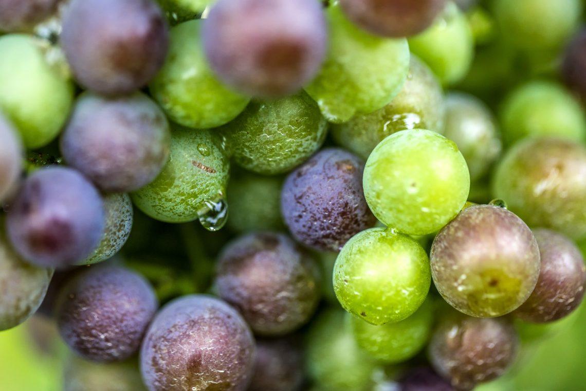 Indian Summer wijngaard