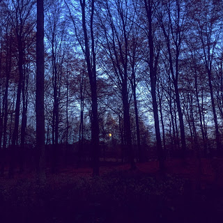 Trees speaking at dusk